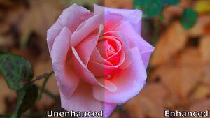 Enhancement of colour rose.jpg