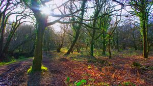 Enhancement of colours - woods.jpg