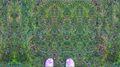 Grass by Chelsea Morgan.jpg