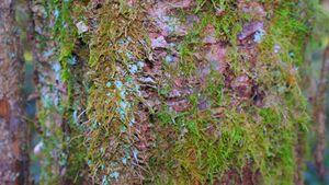 Moss on tree bark.jpg