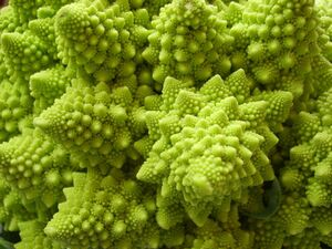 Natural fractal close up.jpg