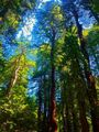 Red Woods by CountRoloff.jpg