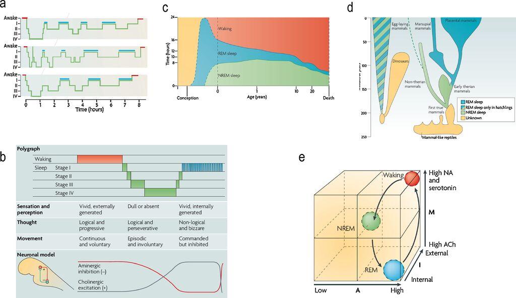 Sleep Phenomenology+AIM Model.jpg