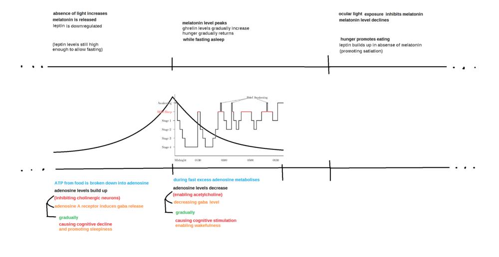 Sleep cycle map.png