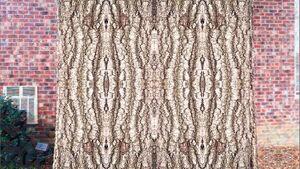 Symmetry on treebark.jpg