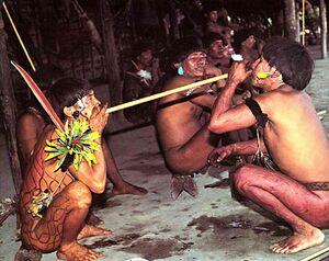 Yanomami-yopo.jpg